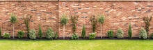 Panoramic Image Of A Newly Planted Garden Or Back Yard Of Hardy Trees, Shrubs And Creepers Along A Bedding In Front Of An Impressive Red Brick Surrounding Wall