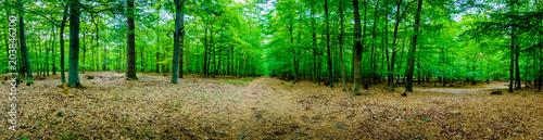 Spoed Foto op Canvas Weg in bos Wald Wanderung - Germany