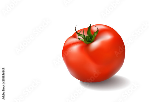 Obraz na plátně Vector illustration of big ripe red fresh tomato isolated on white background