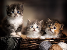 Three Kittens  In A Basket Clo...