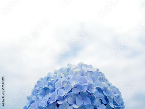 Foto op Canvas Hydrangea Hydrangea Flowers