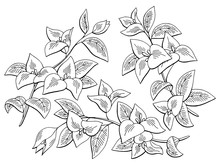 Bougainvillea Flower Graphic B...