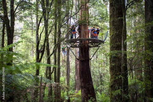 Cuadros en Lienzo Otway Fly Treetop Adventures Zipline Melbourne Australia Great Ocean Road
