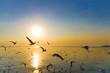 Migratory Seagulls birds flying during sunset on the beach at Bangpu, Samutprakarn Thailand