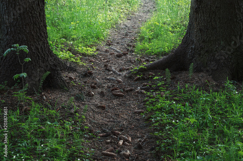 Keuken foto achterwand Weg in bos pathway between trees in spring forest with blooming shamrock