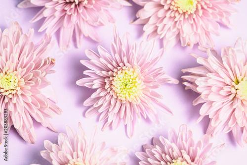Foto op Canvas Bloemen Pink chrysanthemums arrangement on pink background. Flat lay, top view. Floral background.
