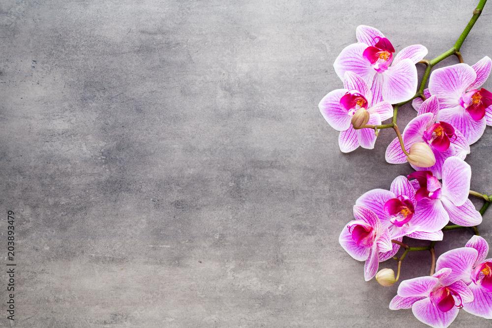 Fototapety, obrazy: Beauty orchid on a gray background. Spa scene.