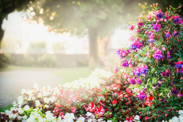 FototapetaSummer garden or park landscaping with beautiful fuchsia flowers bed , outdoor nature