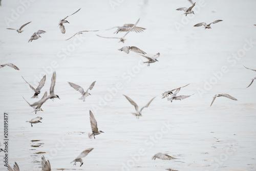 Photo Stands Bird Whiskered Tern at Bangpu Recreation Center, Samut Prakan, Thailand