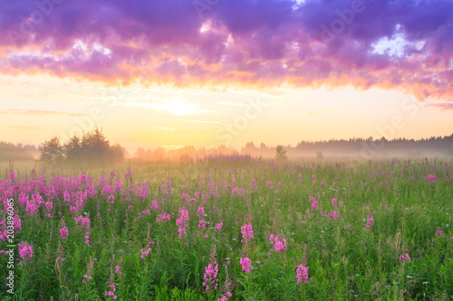 Foto op Canvas Beige rural landscape with sunrise and blossoming meadow