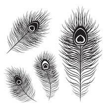 Peafowl Feather Set