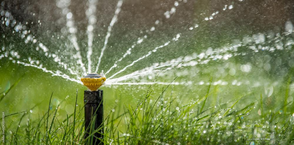Fototapety, obrazy: Sprinkler in action watering grass