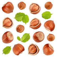 Hazelnuts With Leaves Isolated...