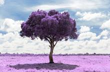 Fantasy And Nature Concept - Purple Acacia Tree In Maasai Mara National Reserve Savannah In Africa, Surreal Infrared Effect