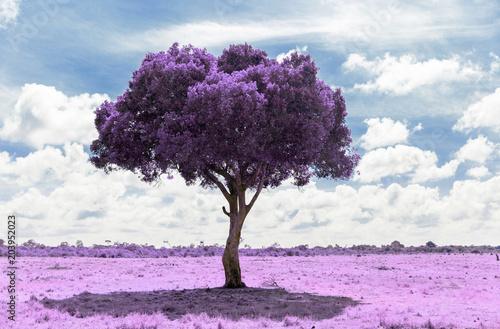 Fototapety do salonu drzewo-fioletowe-w-salonowym-szyku