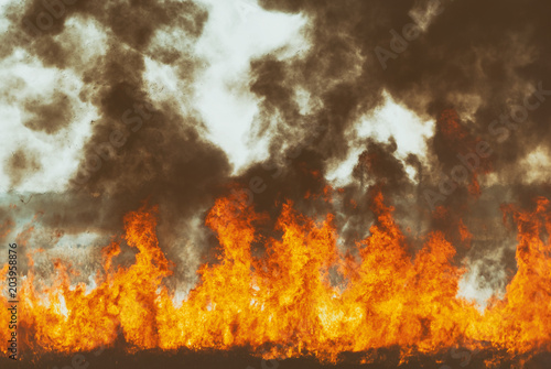 Photo Stands Roe The raging flame of fire burn in the fields, forests and black thick acrid smoke. Big wildfire close-up