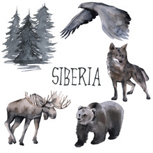 Set Of Siberian. Moose, Wolf, Moon And Eagle. Isolated On White Background.