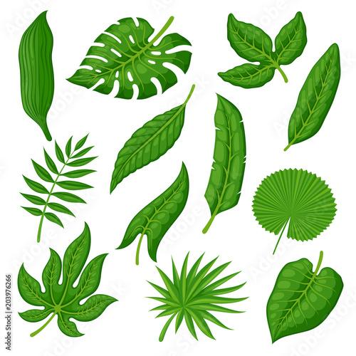 Spoed Foto op Canvas Planten Tropical palm leaves set