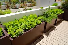 Healthy Bush Green Bean Vegeta...