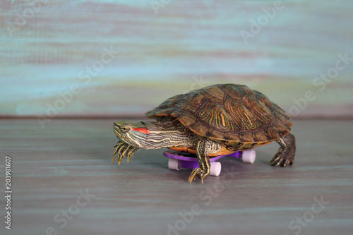 Manual turtle is riding on a skateboard.