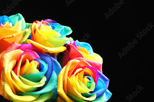 Fototapeta Amazing rainbow rose flowers on black background obraz na płótnie