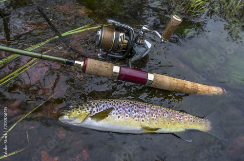 Caught brown trout and fishing spinning rod in water Wallpaper Mural