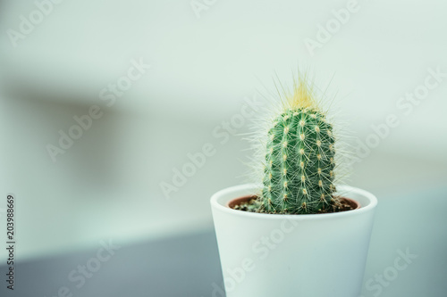 Staande foto Cactus Kaktus in weißem Blumentopf, Zimmerpflane, Textfreiraum