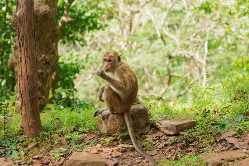 Foto op Canvas Aap Monkey in the wild nature