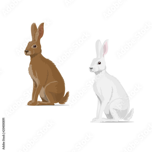 Valokuva Rabbit hare vector animal flat icon