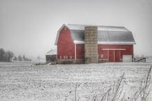 0173 - Winter Red I (0173-BAR-121317-0246P)