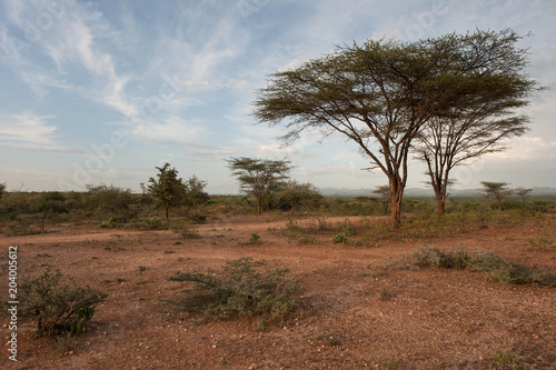 Fotobehang Diepbruine African savannah, brown earth, low green bushes, trees with sprawling crowns.