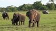 Familiy of elephants in a Safari at Yala National Park, Sri Lanka.