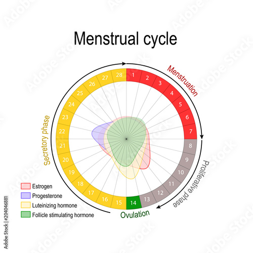 Menstrual cycle and hormone level