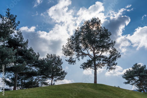 Fotografie, Obraz  The landscape of a tree on hill against blue sky