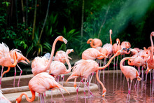 Flamingo Watching On As Others Bicker