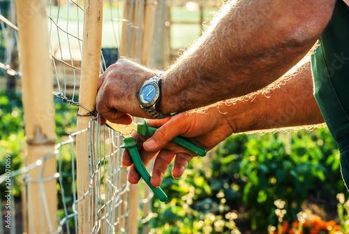 Fotografie, Obraz  Contadino pota il suo orto