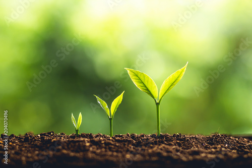 Fotoposter Planten Tree Growth Three Steps In nature And beautiful morning lighting
