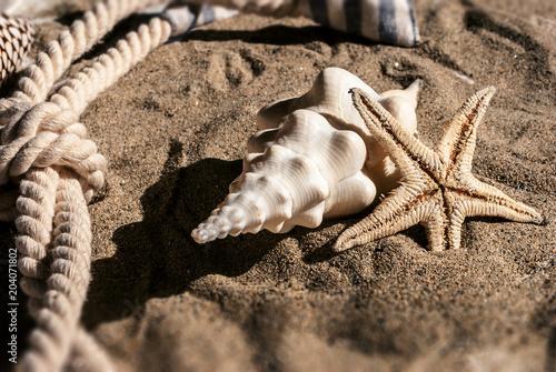Fotografía Stella marina nella sabbia