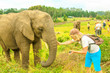 canvas print picture - Elephant experience. Tourist man touchs and photographs an elephant in Plettenberg Bay, Western Cape on Garden Route, South Africa. Travel photographer interacting with Elephant. Big Five encountering