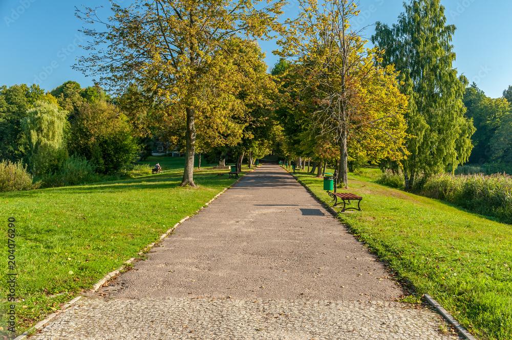 Obraz alejka w parku w Białowieży fototapeta, plakat