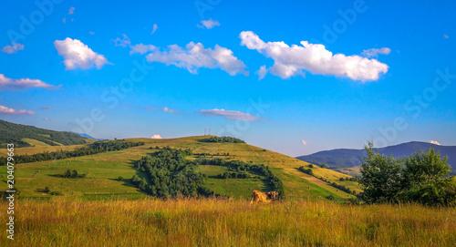 Photo Stands Melon The land of Ukraine