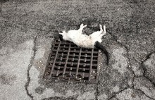Dead Cat Hit On The Street