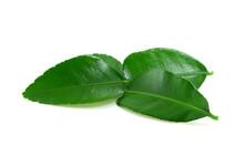 Kaffir Lime Leaf Isolated On W...