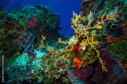 Cadres-photo bureau Recifs coralliens Coral reef