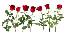 Beautiful Vivid Red Roses On L...