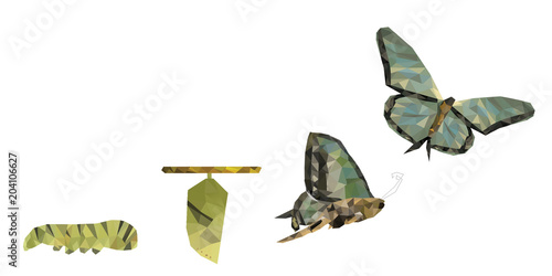 Fototapeta  Isolated white background of beautiful natural green abstract low poly butterfly life cycle, represent successful growth, bright future and transformation concept