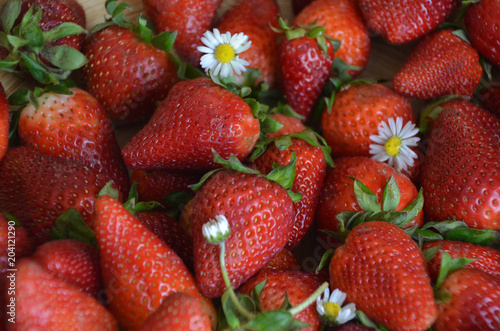Macro strawberry and camomile with natural light