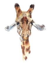 Giraffe Head Portrait Safari A...