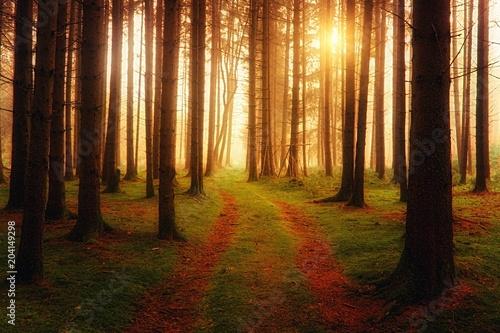 Fototapeten Wald Waldweg