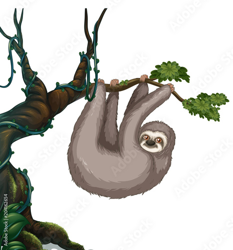 Foto op Plexiglas Kids Sloth hanging on the tree